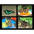 Butterflies Gardens Nature Annimals