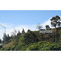 signage for Mosgiel,  everyone calls this Mollywood.  