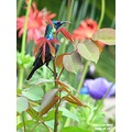 Male Palestine Sunbird gathers food for the newborns