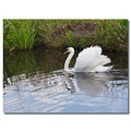 netherlands eemnes water swan reflectionthursday nethx eemnx waten swanx