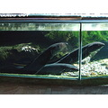 eel fish aquarium water