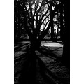 blackandwhite tree shadow