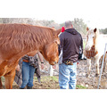 safe haven horse rescue cottonwood california red