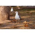 seagull gull bird nature park varna bulgaria
