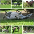 donkey collage