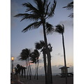 palm trees ocean beach sunrise wind Hollywood Beach Florida blue