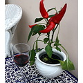 paprika red wine glass