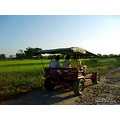 landscape nature thailand poulets 2007 rural transportation