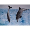 animals dolphins CH1988