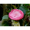 flower nature pink
