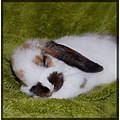 rabbit bunny sleeping