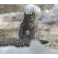 squirrel hungry nature critter sunflowerseed