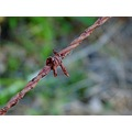 wire fence bush rust barb