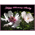 Belated Birthday wishes peonies