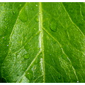 Macro Macro photography leaf dew
