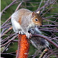 balancing act squirrel