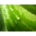 rain water leaf hope raindrops