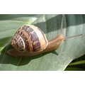the on snail move