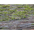 roof tiles moss church