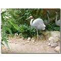 netherlands amersfoort zoo animal bird nethx amerx zoox animx birdx