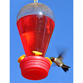 humming bird hummingbird feeder flying birdie hartville mo missouri