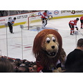 This is Sparty Cat   the Senators mascott.