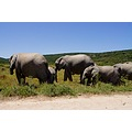 vacation africa addo elephantpark