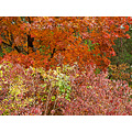 no photographic rules :-) : just colors of autumn (II)