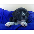 puppy dog pet rescue animal cute sweet love