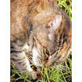 cat feline animal mammal pet family bush