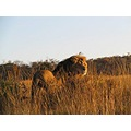 African Animals animals big cats wildlife Africa