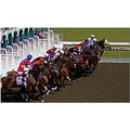 horse race thoroughbreds sport action