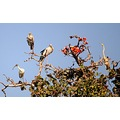 darter open billed stork white ibis birds dandeli karnataka india