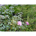 flowers november roses moscow russia blossom buds