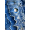 blue map geography butterfly wing pattern texture