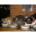 cat christmas meal