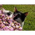 flower smell cat animal
