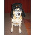 Batdog Soviet spy disguise