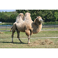 camel stadbredimus moselle luxembourg