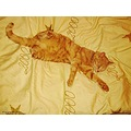 Cat Cezar Bed Lightbrown Relax Skane Sweden December 2012