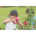 rose flower children plants grass