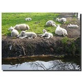 netherlands sgraveland animal sheep nethx sgrax animx sheex