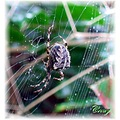 spider web nature insect