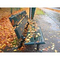 bench autumn leaf leafs