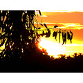 sunset silhouetted trees perth littleollie