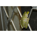 tv viewing frog sceen door home perth littleollie