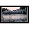 winter lake sea landscape snow forrest sunset