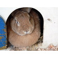 rest pet animal rabbit