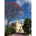 ipe flower pink tree church square