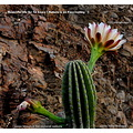 cacti casa imagine nature reserve alora malaga spain insects retreat holiday wor